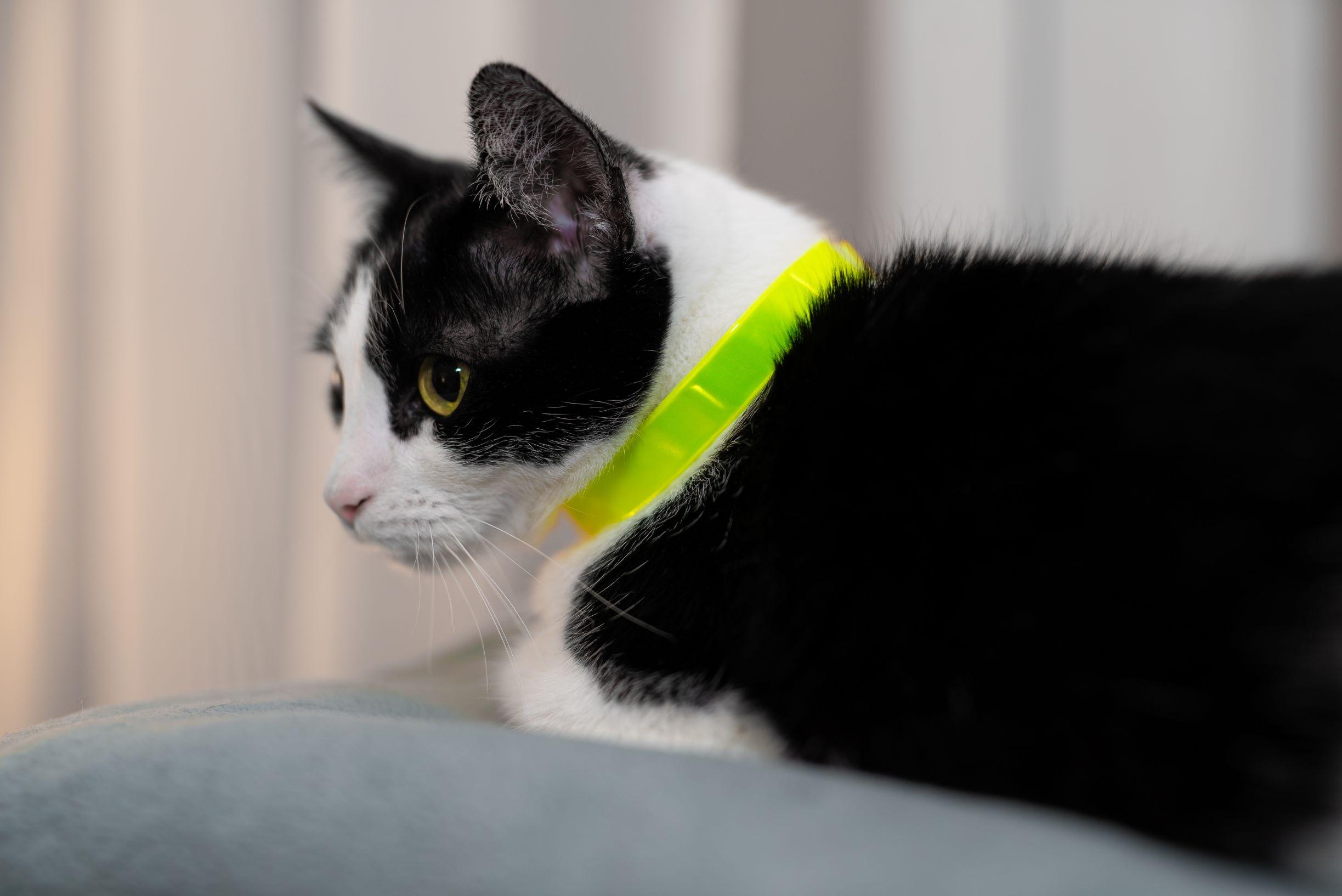 odblaskowa opaska dla kota