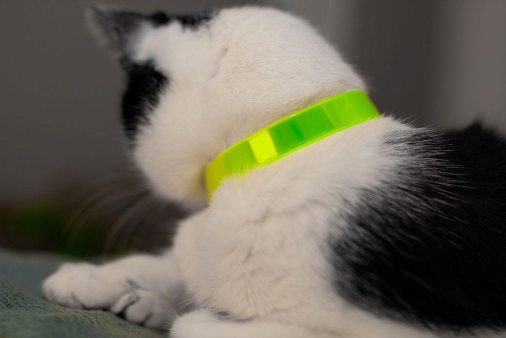 obroża odblaskowa dla kota